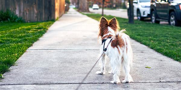 Passejar gossos