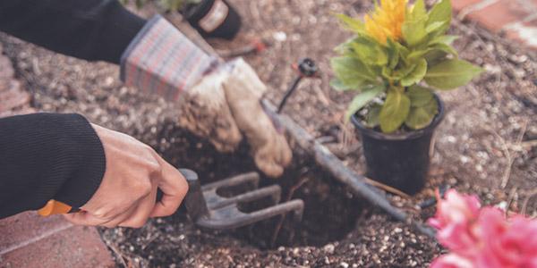 Consells i dubtes sobre jardineria